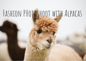 Read more about the article Fashion Photoshoot with Alpacas – Pittsburgh Child Photographer