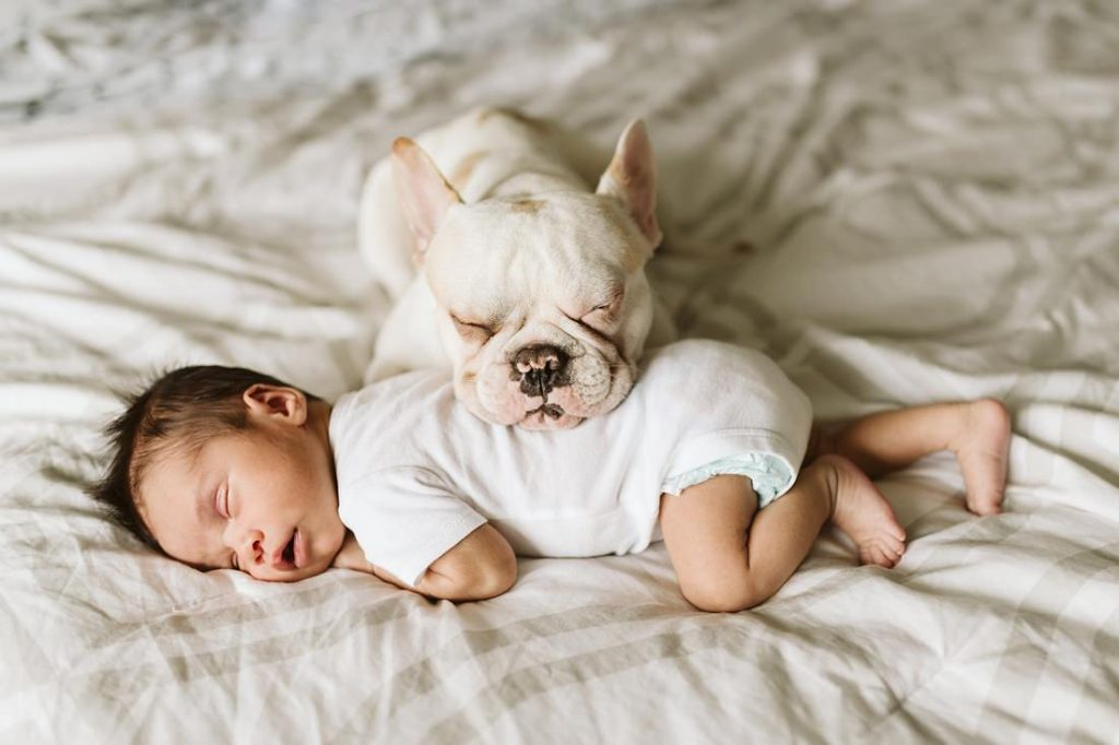 A newborn lifestyle image of a newborn baby laying on a bed while his French Bulldog rests his smiling face on him. Photo by Pittsburgh Newborn Lifestyle Photographer, Laura Mares Photography.
