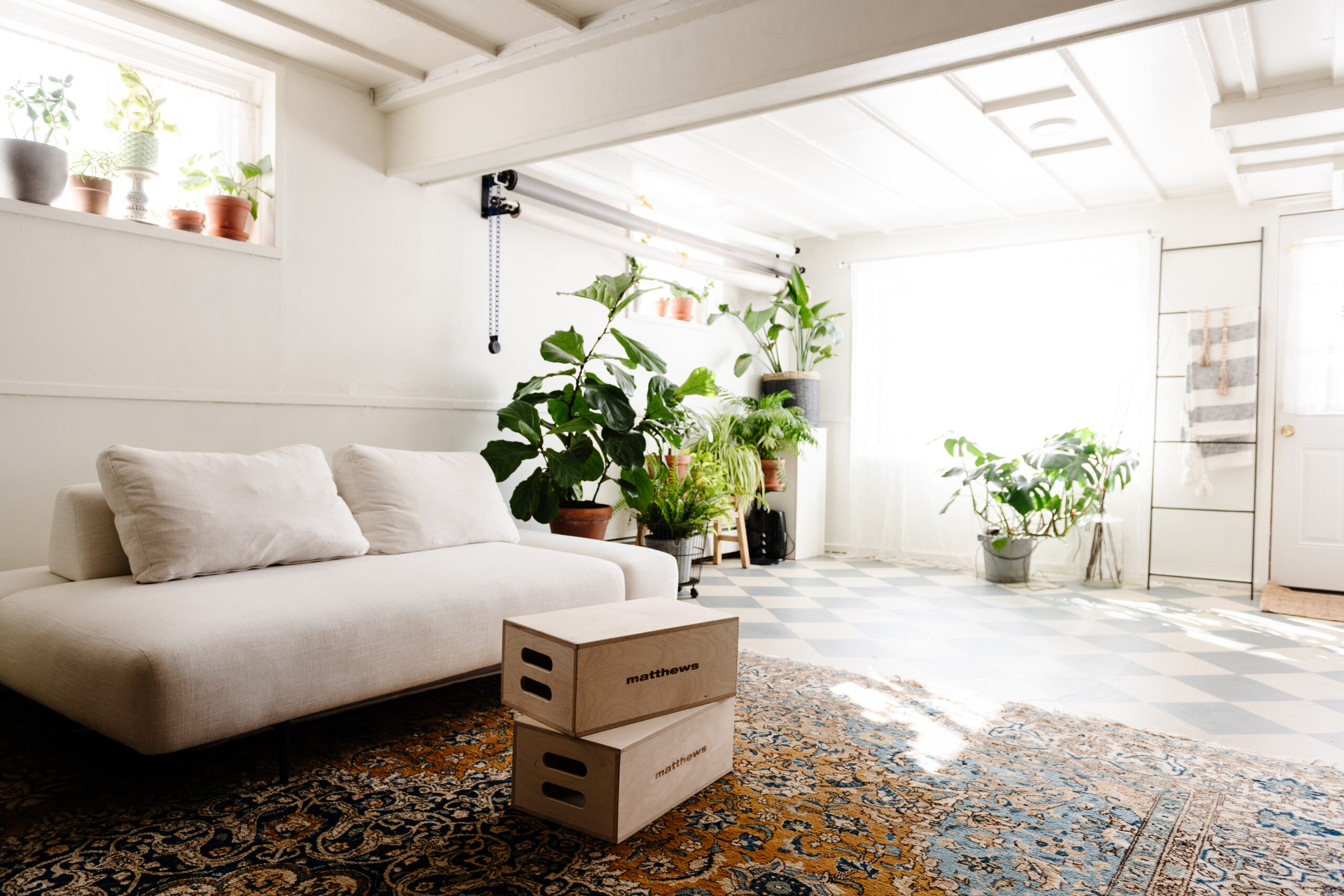 bohemian studio with apple boxes, house plants, persian rug and natural light