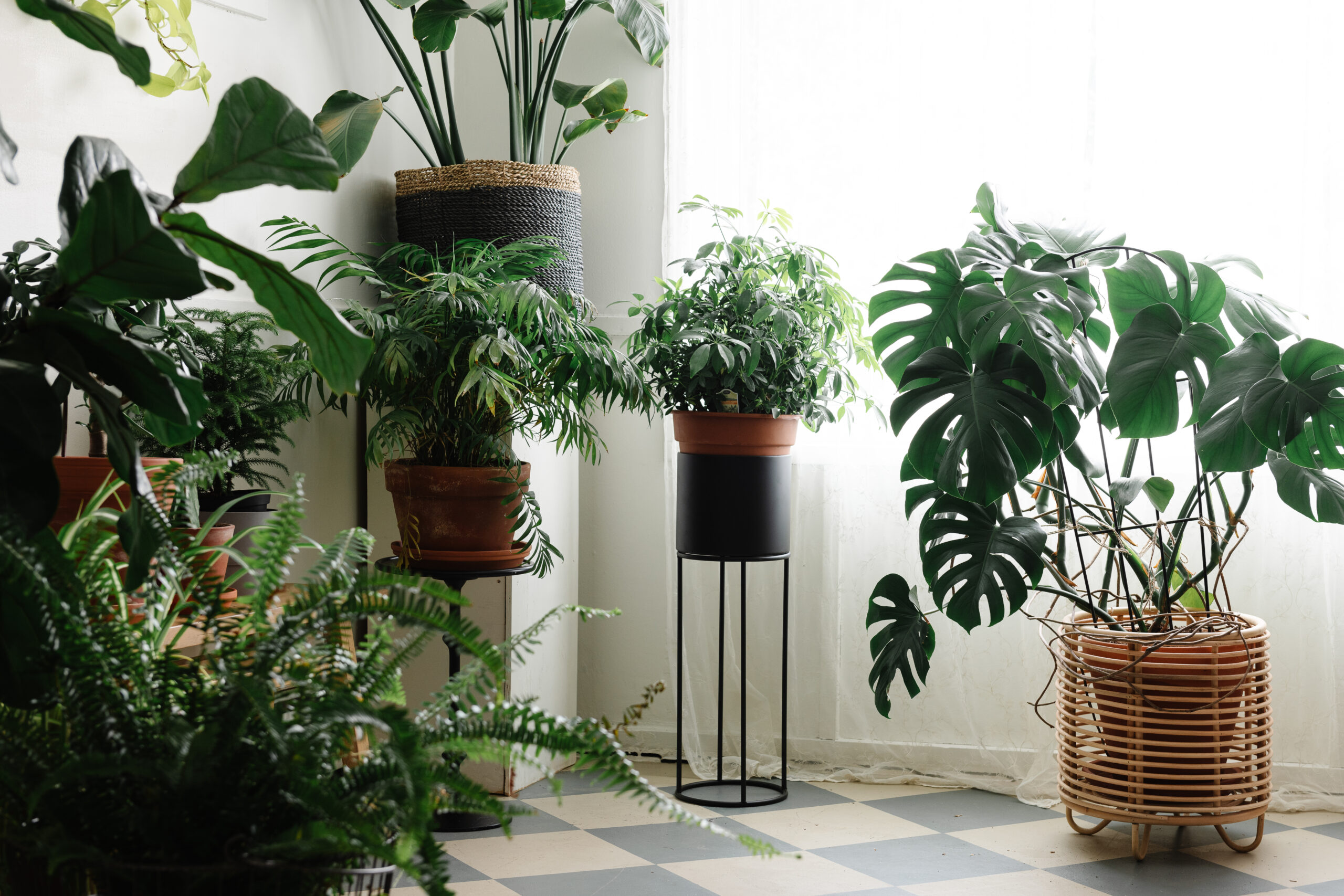 house plants, natural light and a checkered floor