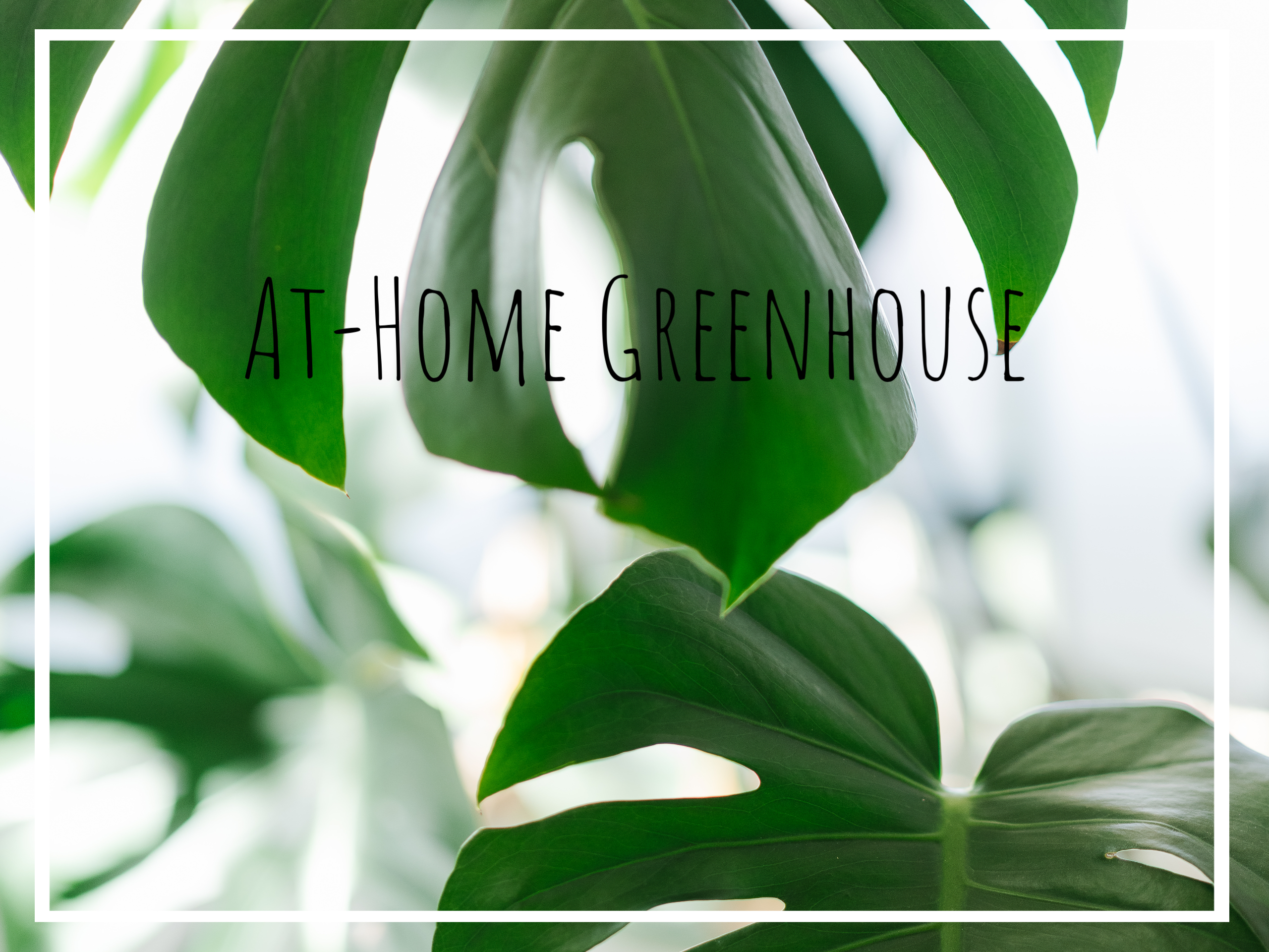 Creating an At-Home Greenhouse – Pittsburgh Photographer